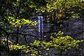 Tews Falls through the trees. - panoramio.jpg