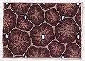 Textile Design Met DP889459.jpg