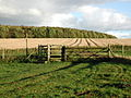 The Wolds Way, Londesborough Park - geograph.org.uk - 590139.jpg