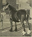 The book of live stock champions (1912) (20373999656).jpg