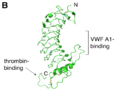 The crystal structure of the GPIbα N-terminal domain depicting important ligand binding sites.png