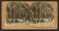 The daily trip between Ouray and Red Mountain, Colorado, by R. Y. Young.png