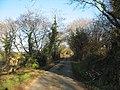 The lane to Gwnhinger near Coed Bodfel woodland - geograph.org.uk - 671438.jpg