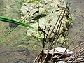 Tiere im Brackwasser.jpg