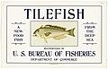 Tilefish - NARA - 5711642 (page 2).jpg