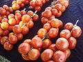 Tomates de colgar, Huerta de Capicorb.JPG