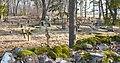 Tornimäe vana kalmistu.jpg