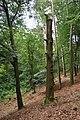 Toter Baum in der Alkenkuhle.jpg