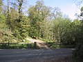 Track into the woodland - geograph.org.uk - 1853593.jpg