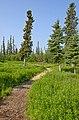 Trail into taiga, Inuvik, NT.jpg