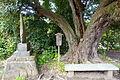 Tree - Hokai-ji - Kamakura, Kanagawa, Japan - DSC08466.JPG