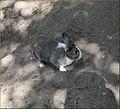 Tree Farm, Shadows and Rabbit 12-8-12 (8297236567).jpg