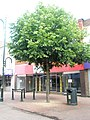 Tree in Gosport High Street - geograph.org.uk - 1364204.jpg