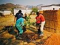Tree planting on Arborloo pit (5566954619).jpg