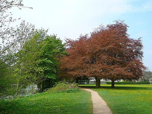 Trees (2479102730)