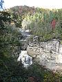 Tsuga caroliniana Linville Falls 5.jpg
