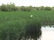 File:TulceaDonaudelta2010Video.ogv