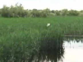 Fișier:TulceaDonaudelta2010Video.ogv