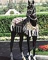 Turkmen Ahalteke horse.jpg