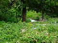 Un espace vert en pleine nature de la commune Messaoud Boudjriou w.Constantine.JPG