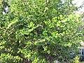 Unidentified Plants - പേരറിയുമോ - 2012-10-25 - 2.jpg