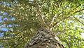 Up A Tree (2378051793).jpg