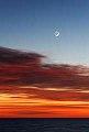 VENUS STAR.jpg