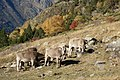 Vall de Sorteny (Ordino) - 5.jpg
