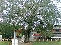 VelloorKunnam Mahadeva Temple Muvattupuzha - panoramio - maheshmm007 (3).jpg
