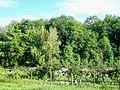 Ver-sur-Launette (60), vergers de Saint-Sulpice-la-Ramée.jpg