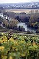 Vigne Pinot noir (Vue sur la Marne) Cl.J.Weber06 JPG. (23677697895).jpg