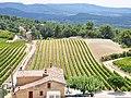 Vignoble de Provence IGP.jpg