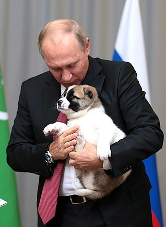 Pets of Vladimir Putin - Putin with his Alabai puppy named Verni, 2017.
