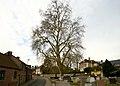 Vrijheidsboom , opgaande plataan - 375293 - onroerenderfgoed.jpg