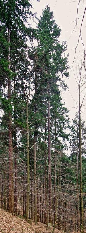 Image of Arboretum Freiburg-Günterstal: http://dbpedia.org/resource/Arboretum_Freiburg-Günterstal