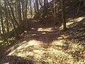 Waldweg-Stainach01.jpg