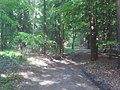 Waldweg in der Geest - geo.hlipp.de - 10597.jpg