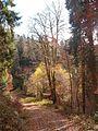 Wanderung im November - panoramio (52).jpg