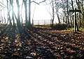 Wauldby Gates Plantation - geograph.org.uk - 623808.jpg