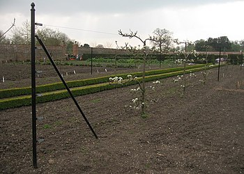 English: Well tended fruit trees Wimpole Hall ...