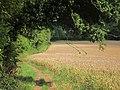 Wheat field - geograph.org.uk - 2521443.jpg