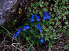Whf blue 09.jpg