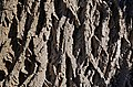 White Ash Fraxinus americana (54-0751-A) Trunk Bark.JPG