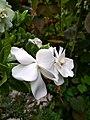 White flower HDR.jpg