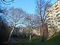 Wiener Naturdenkmal 457 und 620 - 2 Platanen und eine Sommerlinde (Döbling) b.JPG