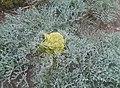 Wild-Flowers-Kerman.jpg
