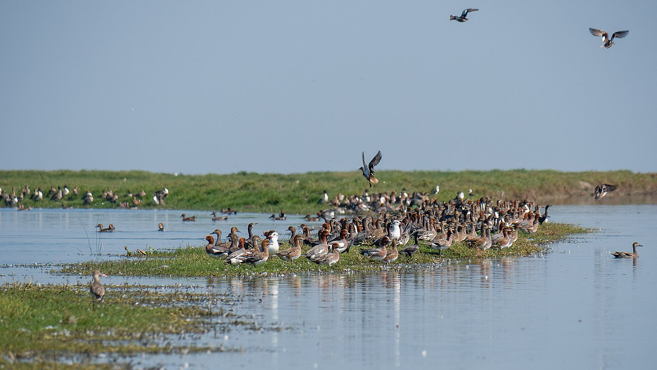 Birds congregate at Nalbana Bird Sanctuary