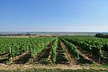 Wine route in Baranja.jpg