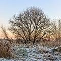 Winters landschap aan de Kleine wielen-Oudeweg. Locatie, Langweerderwielen (Langwarder Wielen) en omgeving 02.jpg