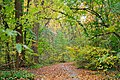 Wissahickon Valley, Chestnut Hill, Philadelphia (6315957018).jpg